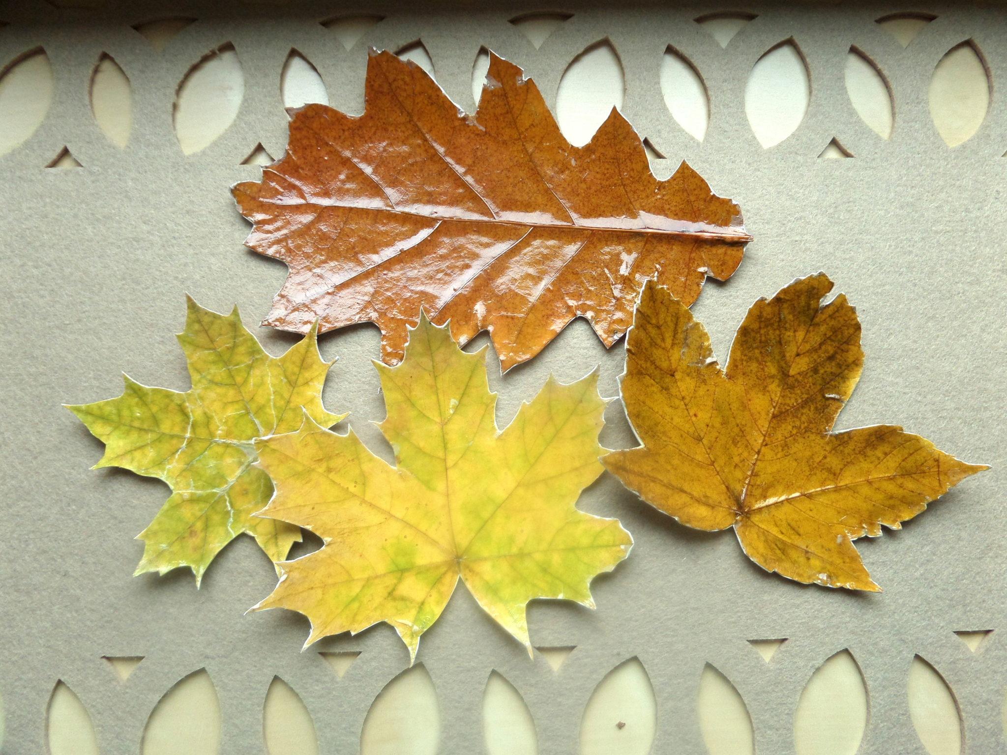 Podkładki z liści